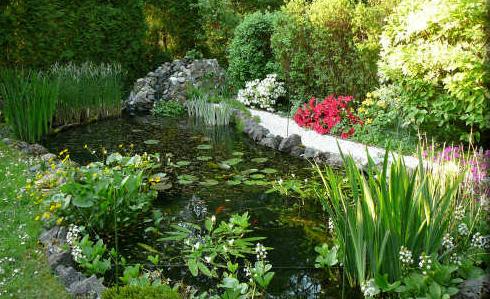 Am nager un bassin avec fontaine d eau - Plantes aquatiques pour bassin de jardin ...